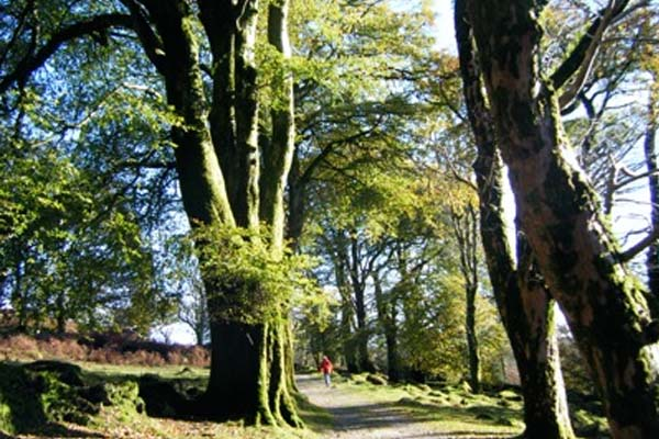 Yarner Woods and Templer Way